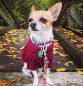 Havarti enjoying a crisp autumn day